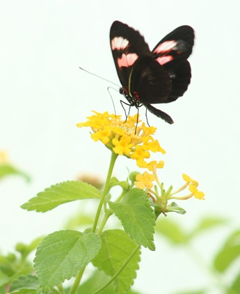 light-and-graceful-butterfly-Phuong-tran-cropped-600